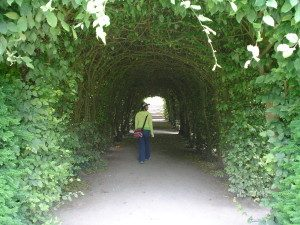 living tunnel